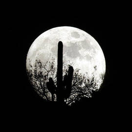 Moonrise At Sabino Canyon by Douglas Taylor
