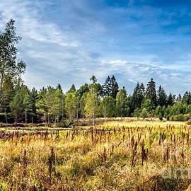 Wetlands in the Black Forest by Bernd Laeschke