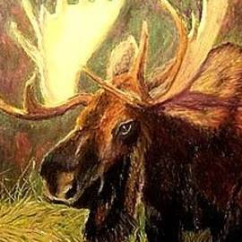 Jay Johnston - Moose in Sunlight
