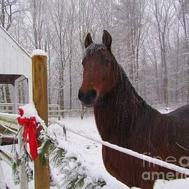 Elizabeth Dow - Morgan Horse Christmas