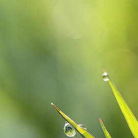 LHJB Photography - Morning dew on grass