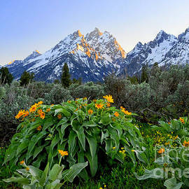 Deby Dixon - Morning in Teton