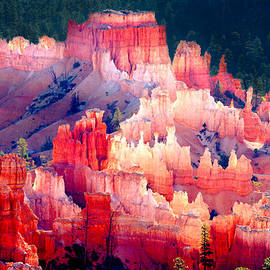 Morning Light - Bryce Canyon by Douglas Taylor