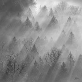 Lori Grimmett - Morning Light