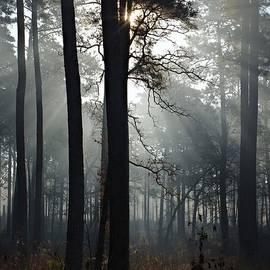 Gary Richards - Morning Mist II