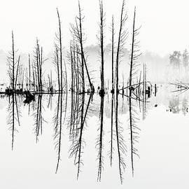 Morning Mystery Pine Lands by Louis Dallara