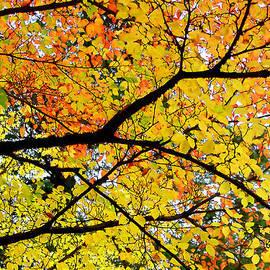 Debra Orlean - Mosaic Trees