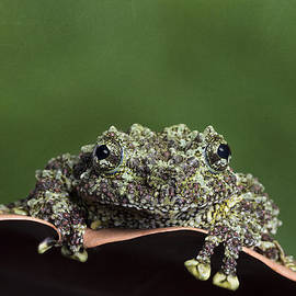 Moss Frog by Linda D Lester