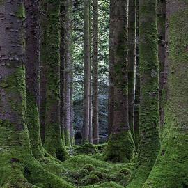 Kevin Woodbury - Moss Garden