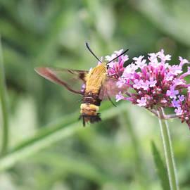 Moth On Flowers by Jill Bell