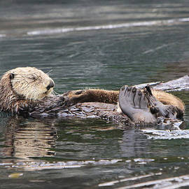 Mother and Pup Resting by Shoal Hollingsworth