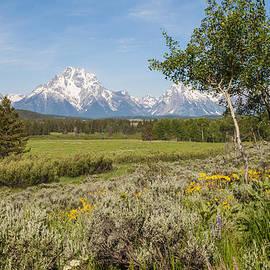 Brian Harig - Mount Moran View