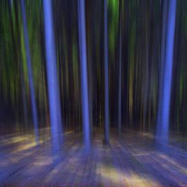 Florin Birjoveanu - Moving Forest