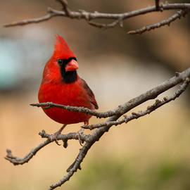 Sandra Clark - Mr. Cardinal
