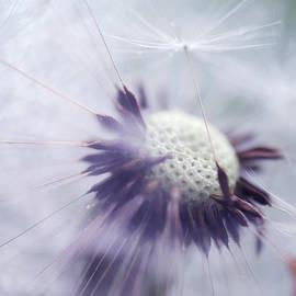Mr. Dandelion 1. Inner Light by Jenny Rainbow