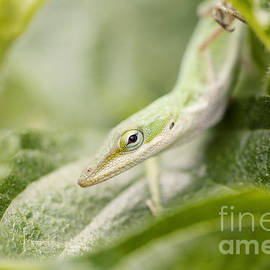 Mr Lizard by Erin Johnson