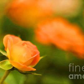 Darren Fisher - MS Rose