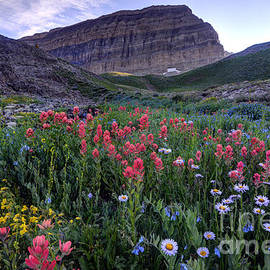 Mt. Timpanogos Wildflowers at Sunset by Gary Whitton