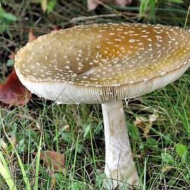Mushroom by Janice Drew