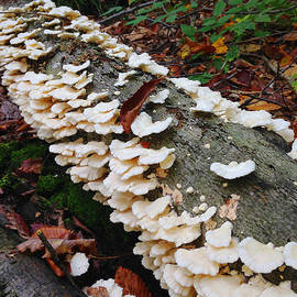 Jeff Klingler - Mushroom1