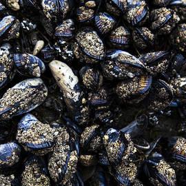 David Millenheft - Mussels