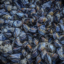 Mussels In Blue Abundance by Roxy Hurtubise