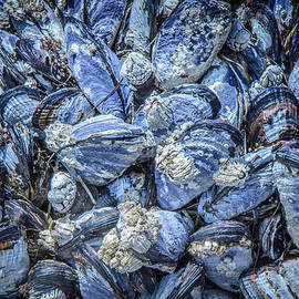 Roxy Hurtubise - Mussels in Beautiful Blue