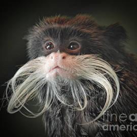 Jim Fitzpatrick - Mustached Monkey Emperor Tamarin III