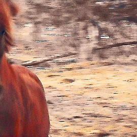 Patricia Keller - My Fine Friend The Flashy Chestnut Stallion