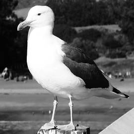 My Gullfriend by Julie Hughes