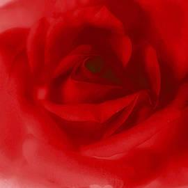 The Art Of Marilyn Ridoutt-Greene - My Painted Love