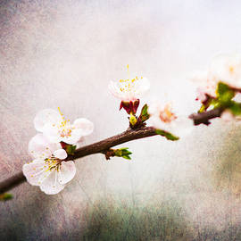 Alexander Senin - Mysteries Of Spring 4 - Square