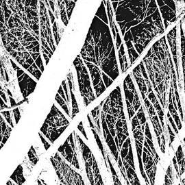 Steven Milner - Mystic Forest