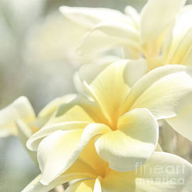Na Lei Pua Melia Aloha E Ko Lele by Sharon Mau