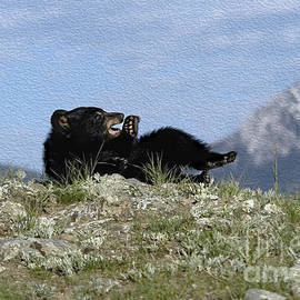 Wildlife Fine Art - Napping
