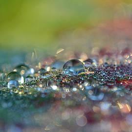 Nature Sparkles by Melanie Moraga