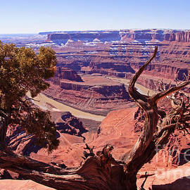 Nature's Frame - Dead Horse Point by Bob and Nancy Kendrick