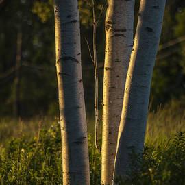 Natures Glow by Karol Livote