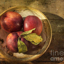 Nectarines In A Bowl by Terry Rowe