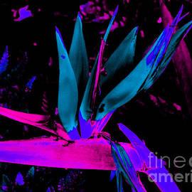 John Le Brasseur - Neon Flower