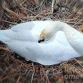 Ed Weidman - Nesting Swan