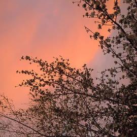 Dan Whittemore - Nevada Sunrise