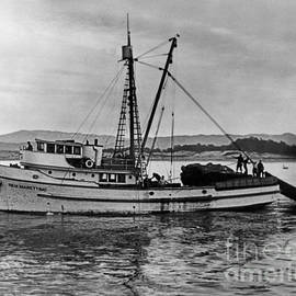 New Marretimo Purse seiner Monterey Bay Circa 1947 by California Views Archives Mr Pat Hathaway Archives