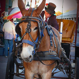 New Orleans Mule Carraige by Jeanne  Woods