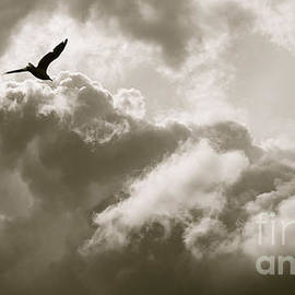 Bird In The Sky Free Spirit Soaring To Heaven by Toula Mavridou-Messer