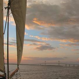 Newport Sail by Tammie Miller
