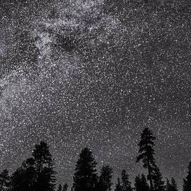 Night Serenity by Nancy Strahinic