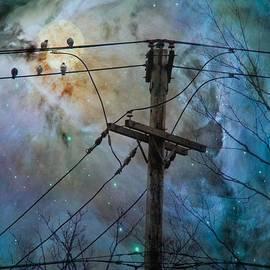Gothicrow Images - Night Spark Birds