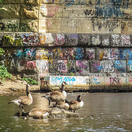 Patti Deters - Graffiti Geese
