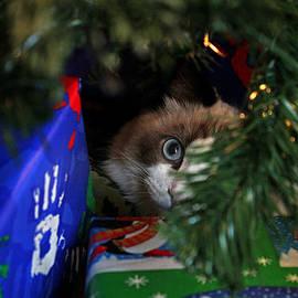 No Peeking by Judy Vincent